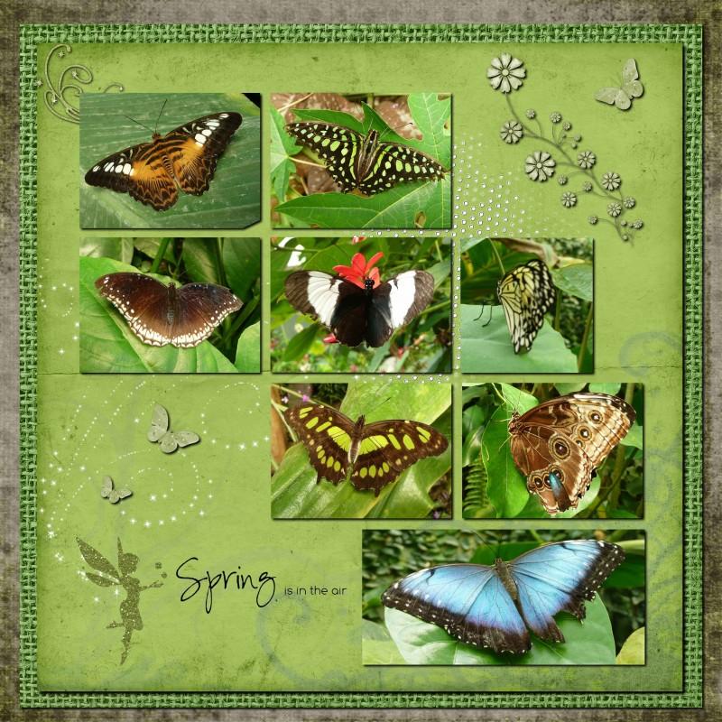 """Serre aux papillons d'Honfleur - Kit """"Edge of woods"""""""