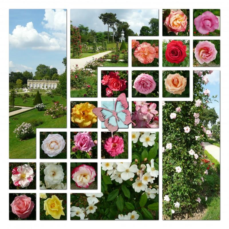 Les roses du jardin de Bagatelle